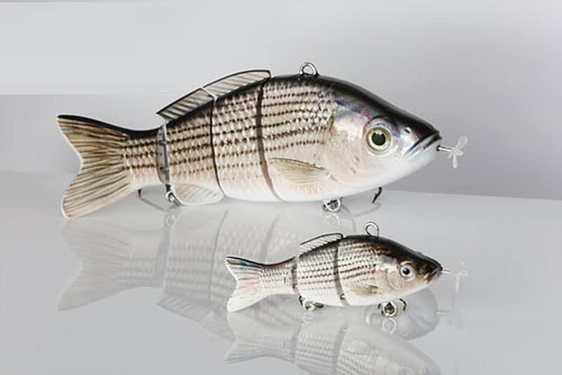 Hybrid Strped Bass Mini